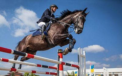 The Best English Jumping Horse-Saddles