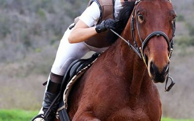 The Best Equestrian Unisex Leather Gloves