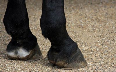 The Best Equine Hoof Conditioner