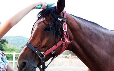 The Best Equine Mane & Tail Brushes