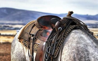 The Best Western Trail Horse-Saddles