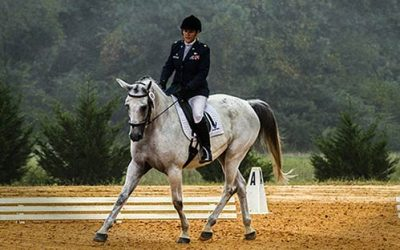 The Best English Dressage Horse-Saddles: Steal the Show