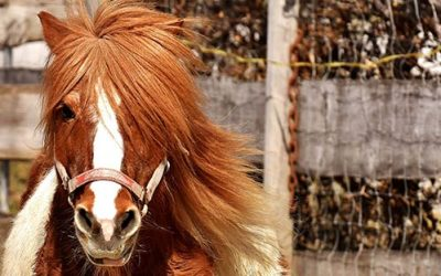 The Best Equine Detangling Conditioner