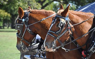 The Uses of 6 Common Types of Bridles and Where to Buy Them