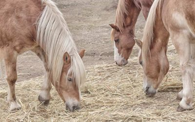 How Much Hay Should a Horse Eat Per Day?