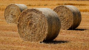 a-whole-ton-of-hay