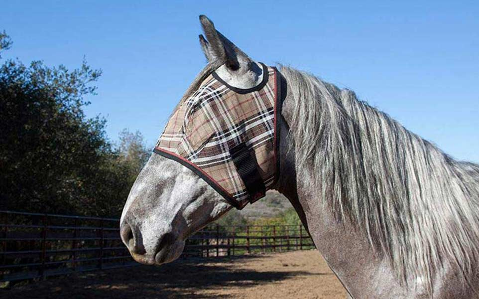 The 4 Best Fly Masks for Horses