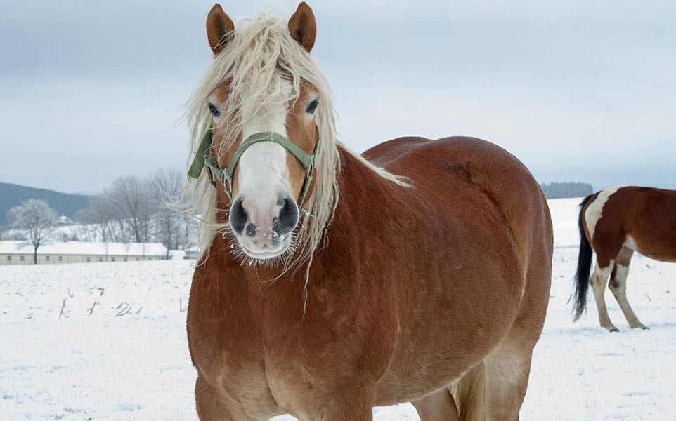 Caring for Horses in Winter (The Four Best Tips)