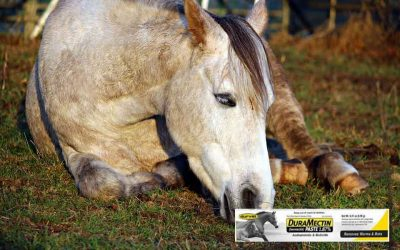 How Often to Deworm Horses?